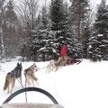 Hundeschlitten-Tour in Ontario: Nach einer Weile kriegen Mensch und Tier gemeinsam fast jede Kurve.