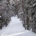 Ski laufen in Quebec.
