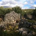 Eine alte Schutzhütte in unseren Olivenhainen