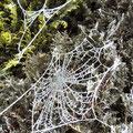 Auch für die Spinnen endet die Jagdsaison.