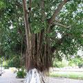 Bäume mit Insektenschutz