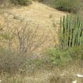 Landschaft zwischen Zipolite und Oaxaca
