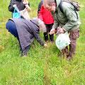 Cueillette avec Yves, ethon-botaniste. On apprend à observer, à différencier et on apprend à cueillir avec soin juste selon de notre besoin.