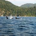 orca, vancouver island, bc, canada