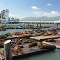 sea lions, san francisco, ca, usa