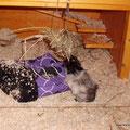 Lina stützt sich am Schlafsack ab, um besser an die Heukugel zu kommen...