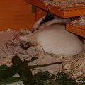 Samba hat ihr Beinchen auf eine kühlschrankkalte Bodenfliese gelegt