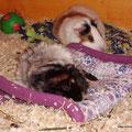 Samba und Lina sind müde
