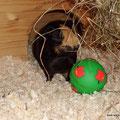 """Merlin und """"sein"""" grüner Snackball"""