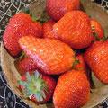 行商中に採れたて苺におよばれしました!甘い甘い。