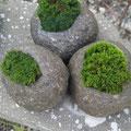 苔×軟石。。。いいでしょ