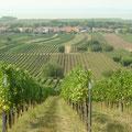 Blick von den Weingärten auf den Neusiedlersee