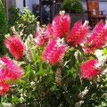 Frühjahrsblumen April 2007