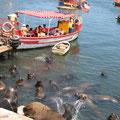 Die Seelöwen und Pelikane warten aufs Essen.