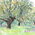 chênes lièges, Extremadure
