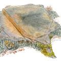 Souche d'un vieux chêne. Illustration pour l'ONF (Office National des Forêts)