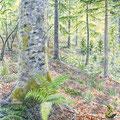 Sous-bois, composition. Illustration pour l'ONF (Office national des Forêts)