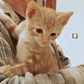 LEO, ca. 8 Wochen – RESERVIERT –