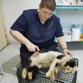 Das macht schon sehr traurig, diese verwahrloste, völlig verschmutzte und obendrein verletzte Katze anzusehen!