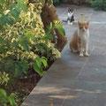 """Katzen die am Hotel """"Atlantica Imperial"""" leben und ebenfalls von uns kastriert wurden."""