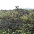 Coulée de lave du Mont Cameroun