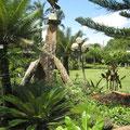 Jardin botanique SABOGA de Bafut