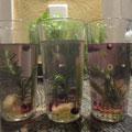 Immunpower,Wasser,Ingwer,Rosmarin,Zitronengras,Honig