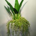 観葉植物寄せ鉢