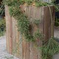 リプサリス&アンティークウッド花器