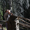 Romania - Experience Wilderness Eastern Carpathians - Beobachtung eines Dreizehenspechts (Picoides tridactylus)