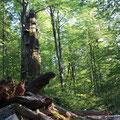 """Naturschönheiten Kroatiens"" - Risnjak Nationalpark"