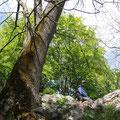 Ungarn - Naturtour - Bükk Nationalpark