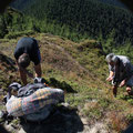 Romania - Experience Wilderness Eastern Carpathians - Collecting lingonberries (Vaccinium vitis-idaea)