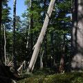 Austria - Experience Wilderness Kalkalpen National Park