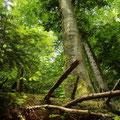 ... und wandern an den Rand eines unberührten Urwalds!