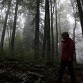 Slovenia - Naturtour - Urwald von Kocevski Rog