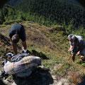 Romania - Experience Wilderness Eastern Carpathians - Sammeln von Preiselbeeren (Vaccinium vitis-idaea)