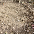 South Africa - Hluhluwe Imfolozi Park Wilderness Trail - Elephant footprint