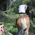 Romania - Experience Wilderness Eastern Carpathians - Horseback riding