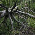 Duch wilde Wälder wandern