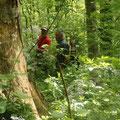 Zudem erforschen wir einen der letzten kleinen Urwald-Flecken Österreichs...