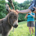 Ungarn - Naturtour - Ein junger Esel genießt die Streicheleinheiten im Kiskunsag Nationalpark