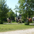 Pferdegäste