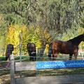 Große Paddocks mit Unterstand getrennt mit Doppelzaun von unseren Herden