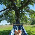 Unter den Apfelbäumen