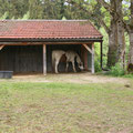 Paddock mit Unterstand für 2 Pferde unter 155 cm