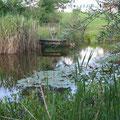 Unser Teich