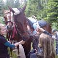 am Ende haben wir die Pferde geschmückt