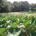ん~・・・見事な自由的自然農法・・・そんな雰囲気
