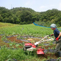 雑草も大事なのですが・・・草の管理をしております